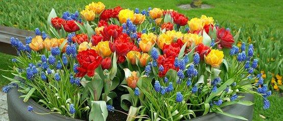 Blumentrog Mit Bunten Blumen Im Herbst Schon Blumenzwiebeln Setzen Rwa