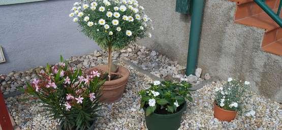 Kubelpflanzen Im Garten Lagerhaus Landforst Pflanzen Samereien