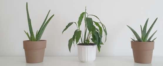 Luftreinigende Pflanzen fürs Schlafzimmer | Lagerhaus ...