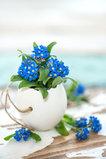 Vergissmeinnicht in der Eierschalen-Blumenampel. © GettyImages