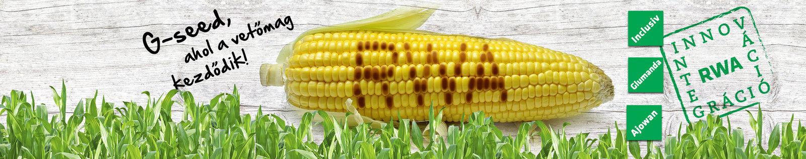 kukorica banner
